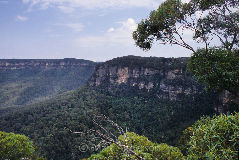 A view of eucalyptus forest & sandstone bluffs in the Blue Mountains National Park, NSW, Australia.