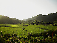 A vietnamese farmer walks through a rice field by sunrise in Tuyen Quang province. Scenery is quite, peacefull with warm and vivid colors. Vietnam, Asia