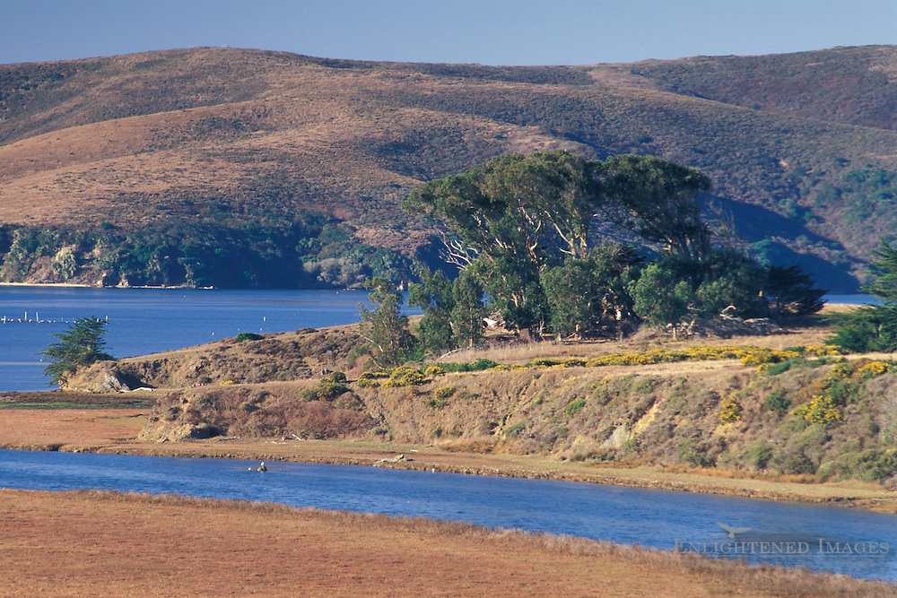 Tidal estuary and rolling hills in summer at Tomales Bay, near Point Reyes, Marin County coast, California