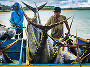 18 JULY 2016 - KUTA, BALI, INDONESIA:  Yellowfin tuna in a small boat at Pasar Ikan pantai Kedonganan, a fishing pier and market in Kuta, Bali. The fish were caught by trawlers working in Indonesian waters and transferred to smaller boats which then brought the yellowfin into shore. Yellowfin are extremely popular with Japanese consumers for sushi and sashimi and the best yellowfin caught in Indonesian waters are sent directly to Japan.   PHOTO BY JACK KURTZ