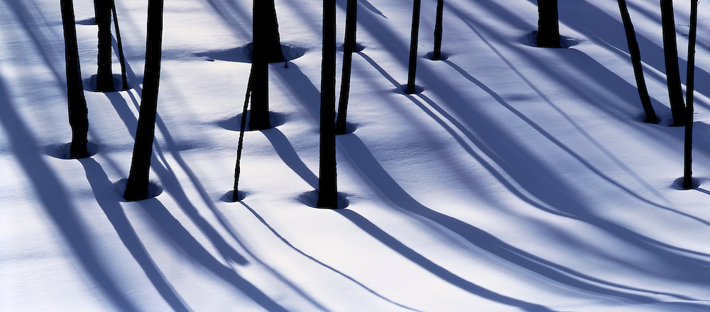 Burnt trees and shadows on snow, Blacktail Plateau, Yellowstone National Park, Wyoming