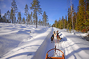 Wilderness husky sledding taiga tour with Bearhillhusky in Rovaniemi, Lapland, Finland