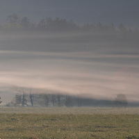 Morning fog shrouds hillside and field in Cades Cove, part of Great Smoky Mountain National Park