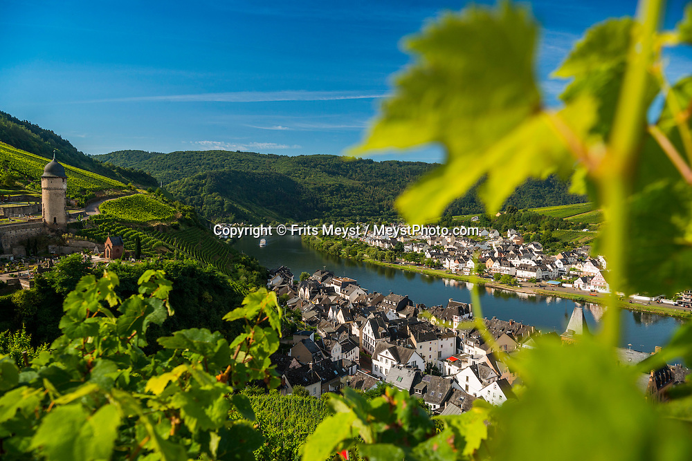 Zell, Mosel, Germany, August 2016. Stunning river views from the vineyards around Zell. Zell (Mosel) is a town in the Cochem-Zell district in Rhineland-Palatinate, Germany. The Moselle river twists and turns its way between Trier and Koblenz along one of Germany's most beautiful valleys. At some places the terraced vineyards are the steepest of all. Some of the best Riesling wine is made here. Castles towering over romantic wine villages line the banks of the river. Photo by Frits Meyst / MeystPhoto.com