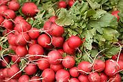 close up of organic beets displayed at a green market