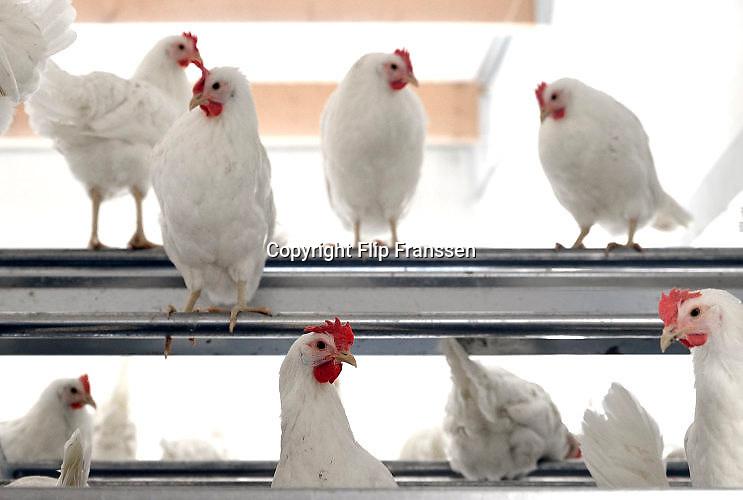 Nederland, the Netherlands, Oirlo, 10-10-201724.000 Kippen, leghennen, in de hypermoderne en meest duurzame kippenstal ter wereld.  De Kipster moet een kippenbedijf zijn wat milieuvriendelijk en diervriendelijk eieren produceert. De stal is klimaatneutraal.De kippen komen komende week in de stal. Via zonnepanelen op het dak wordt eigen stroom opgewekt.Foto: Flip Franssen