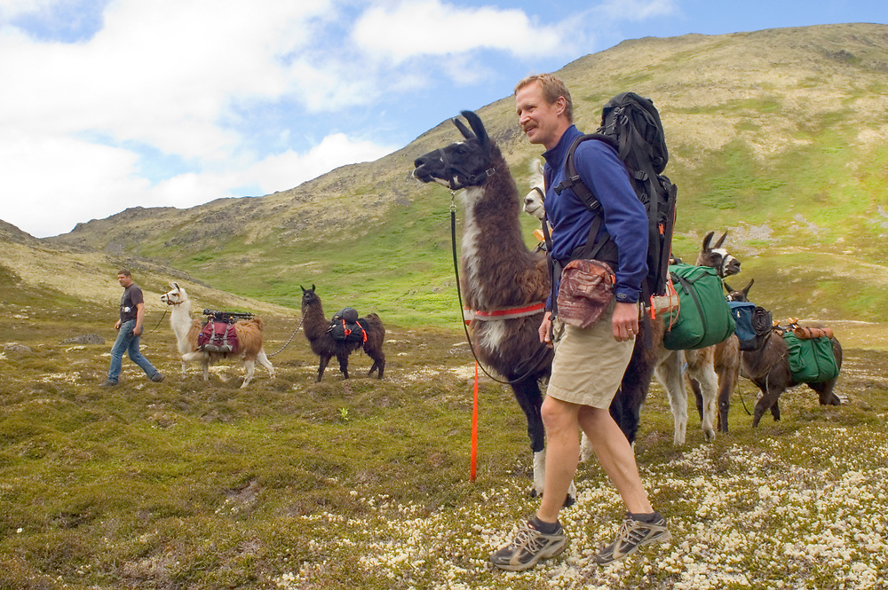 A popular way to hike and camp on the Kenai Peninsula involves letting a guide and llamas pack your supplies into the backcountry for you...for a price. This leaves you free to wander and take pics and smell the roses.