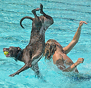 "Rusty and his owner, Laurel Municipal Pool lifeguard, ""Bubba "" Mullins"" get a jump on the annual ""doggy dip"" and get in some quality ""flight time"" before the pool officially opens."