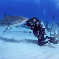 Wetpixel Bahamas Sharks March 2016