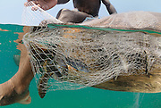 Around 45,000 artisinal fishers deploy their nets in Lake Malawi each day, Lake Malawi, Malawi.