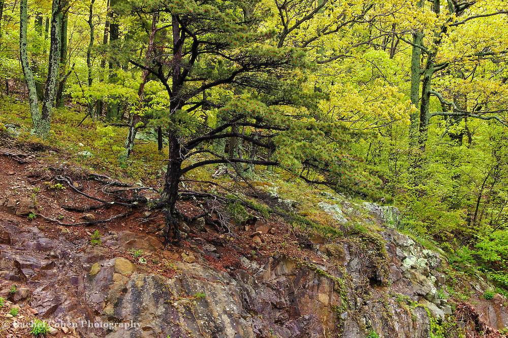 &quot;Rooted in Stone&quot;<br />