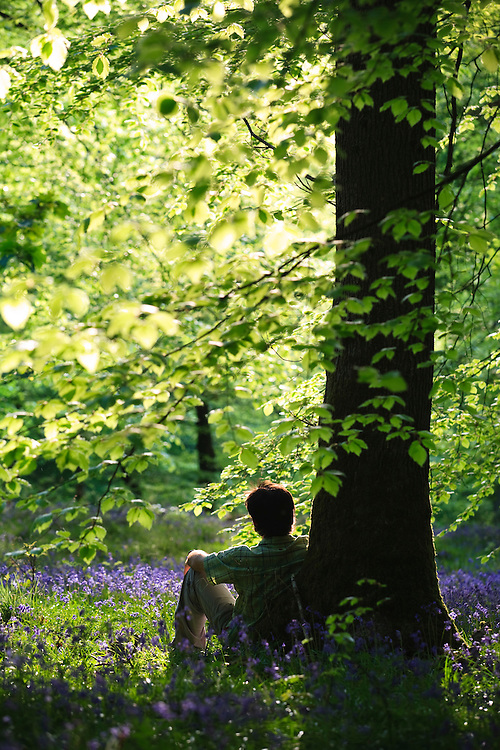 Man sitting in Bluebells in flower in springtime woodland at Upper Soudley in the Forest of Dean, Gloucestershire, UK