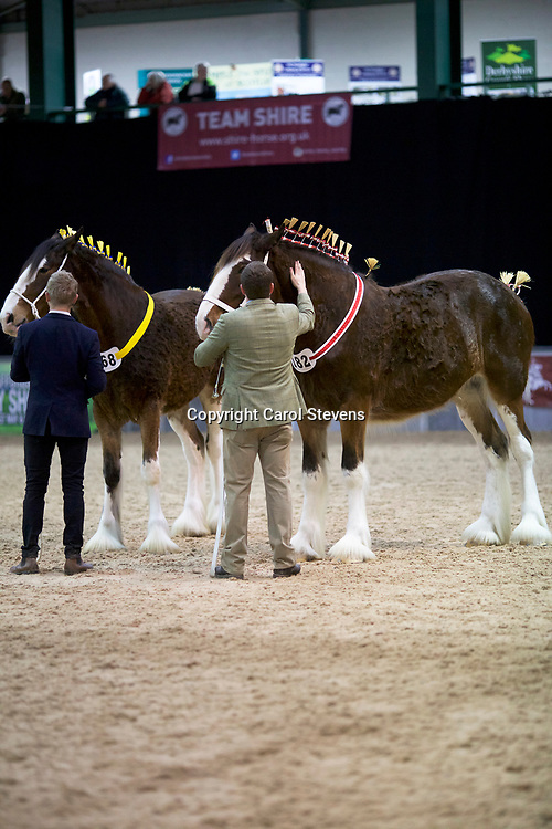 Shire Horse Society Spring Show 2017  Fillies  2 Years Old