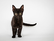 This kitten doesn't have a name yet and is the sibling of the next kitten in the gallery.