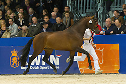 385 - Elton Sollenburg<br /> KWPN Hengstenkeuring - 's Hertogenbosch 2012<br /> © Dirk Caremans