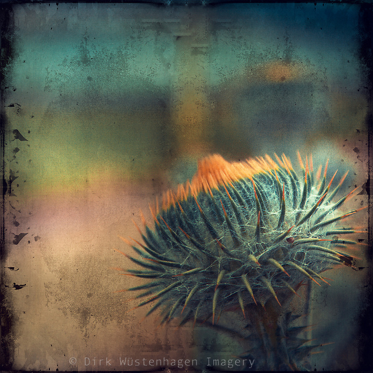 Close-up of a thistle. Teturized photo.<br />