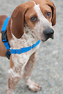 Jones giving a pleading look for a forever home.
