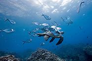 2007 - GALAPAGOS ISLANDS