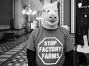 23 JANUARY 2020 - DES MOINES, IOWA: MARK EDWARDS, from Boone, Iowa, wears a pig mask during a rally in the Iowa State Capitol against factory farms. Iowa is one of the leading pork producing states in the US and many of the pig farms are corporate owned factory farms. About 75 people, including farmers, environmental activists, and supporters of family farms, came to a protest in the rotunda of the state capitol in Des Moines. They are trying to pressure Iowa lawmakers to pass a moratorium against new factory farm construction in Iowa.      PHOTO BY JACK KURTZ