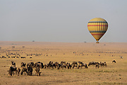 Hot-air balloon drifting over herds of grazing wildebeests in Maasai Mara, Kenya.