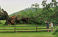 Lee Crook, and Josephine Leuzzi, view this historic five-hundred-fifteen-year-old sixty-foot white oak tree, which was possibly the oldest tree east of the Mississippi River, is shown Wednesday, June 2, 1999, in Solebury, Pa. The tree split in two on Memorial Day, a victim of old age. Josephine Leuzzi, owner of the tree, agreed it was like losing a member of her own family. In the (Photo by William Thomas Cain)