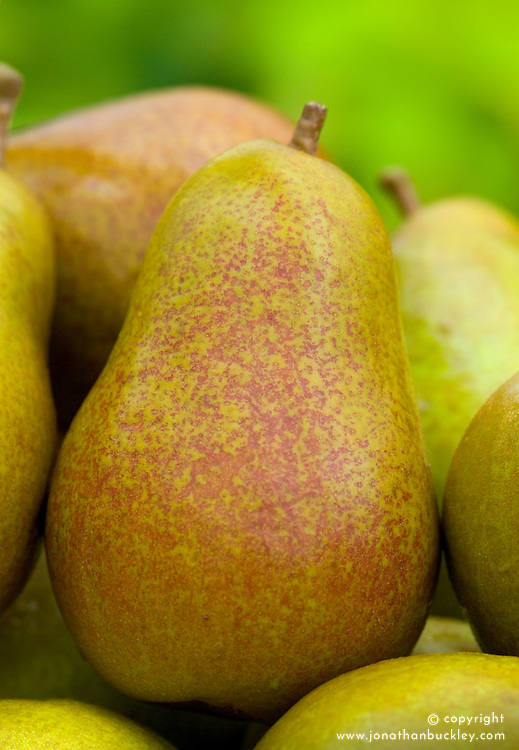 Pear 'Beurre Hardy' - Pyrus