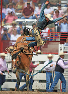 Saddle Bronc Rider Dusty Hausauer gets a free airborne ride from Snuff Mouse, 26 July 2007, Cheyenne Frontier Days
