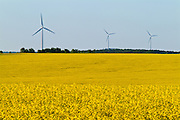 Wind turbines and canola crop<br /> Somerset<br /> Manitoba<br /> Canada