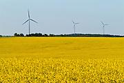 Wind turbines and canola crop<br /> Somerset<br /> Manitoba<br /> Canada