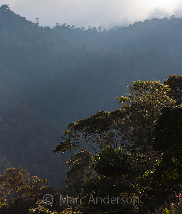View of lush plants and trees in temperate rainforest in the highlands of Enga province, Papua New Guinea.