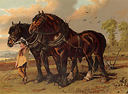 Clydesdale stallion and mare harnessed to the plough with ploughboy in attendance. Chromolithograph from Cassell's 'Book of the Horse'  (London c1875).