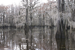 Freshwater Lake Environment  - Winter
