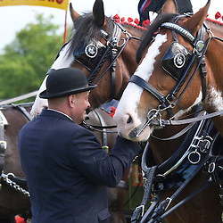 Ronald Brewster driving JW &amp; M McIntyre's Clydesdales, Connie and Vicki<br /> 2nd  Pairs Turnouts