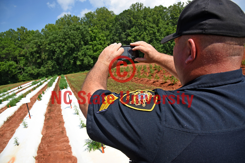 Deputy C.S. Flowers of the Rowan County Sheriff's Department takes photos of industial hemp growing at the Piedmont Research Station outside Salisbury.