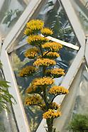 20070710 Century Plant