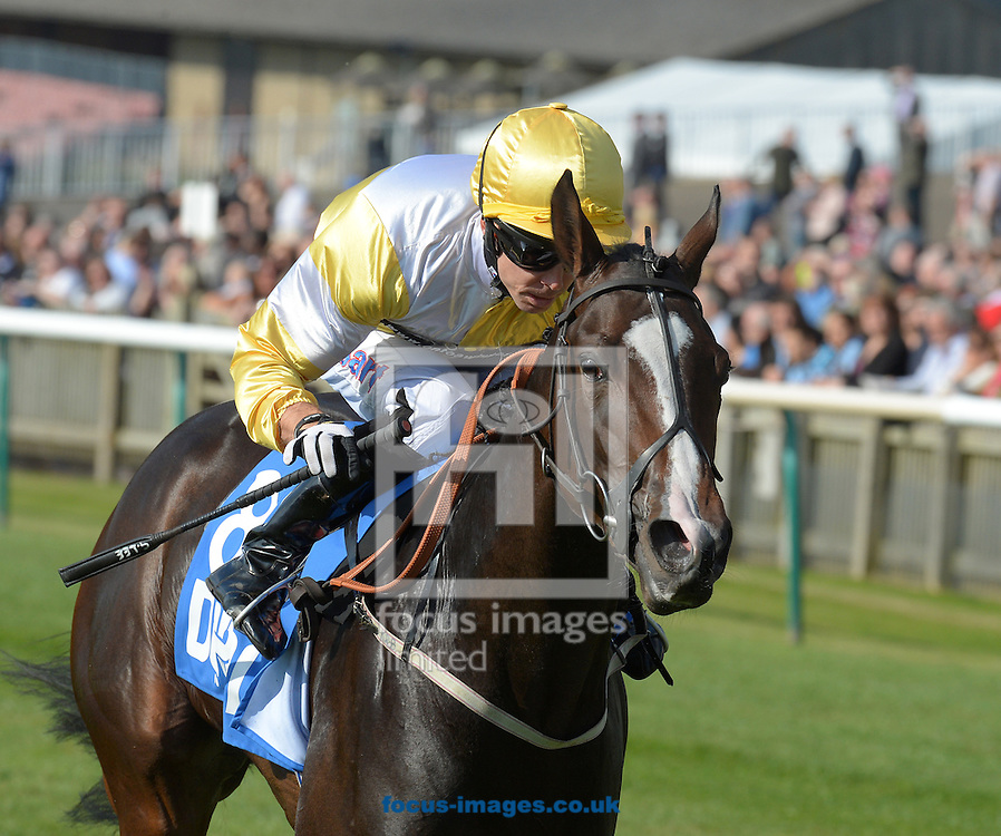 A preview of this weekend's favourites in UK racing.<br /> Picture by Martin Lynch/Focus Images Ltd 07501333150<br /> 13/10/2016<br /> <br /> <br /> Original Caption:<br /> Quiet Reflection wins at Newmarket 9-10-15.