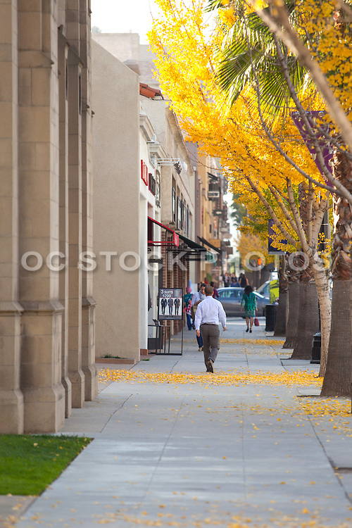 Man Walking on Sidewalk in Pasadena During Fall in the Afternoon