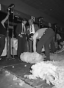 Sheep Shearing and Fleece Rolling Competition. (R57)..1987..07.05.1987..05.07.1987..7th May 1987..The International Sheep Shearing Championship was held today at the RDS in Dublin. A second part of the competition involved the rolling and tying of the fleece once the sheep is sheared.