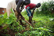 Boys weed a vegetable garden in the village of Ambidedi Poste, Mali on Friday September 3, 2010.