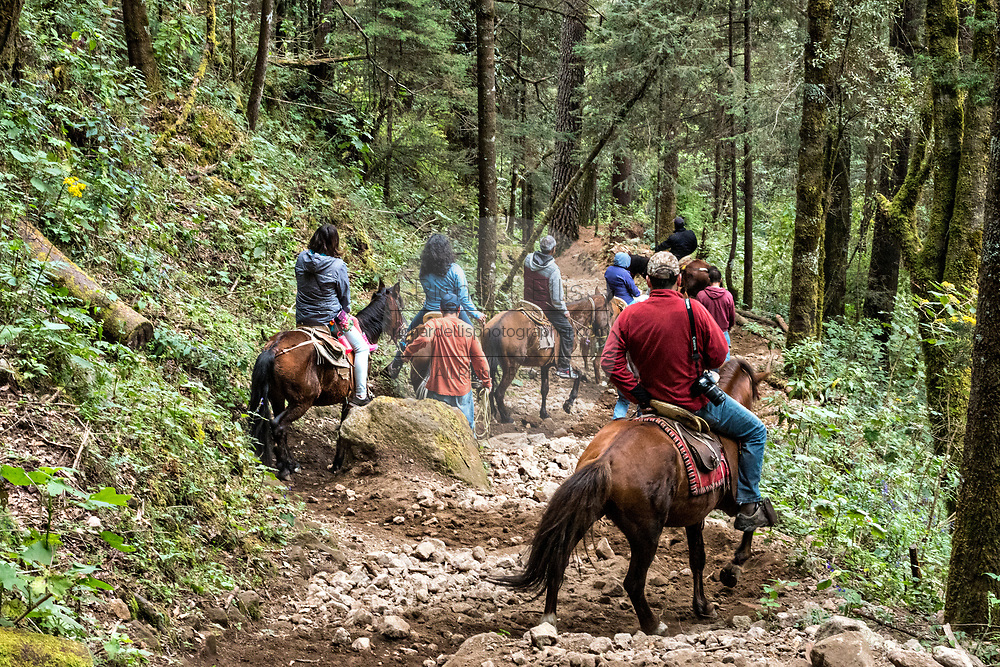 Tourists are led on horseback down the mountain after visiting the Cerro Pelon Monarch Butterfly Preserve near Macheros, Michoacan, Mexico. The monarch butterfly migration is a phenomenon across North America, where the butterflies migrates each autumn to overwintering sites in Central Mexico.