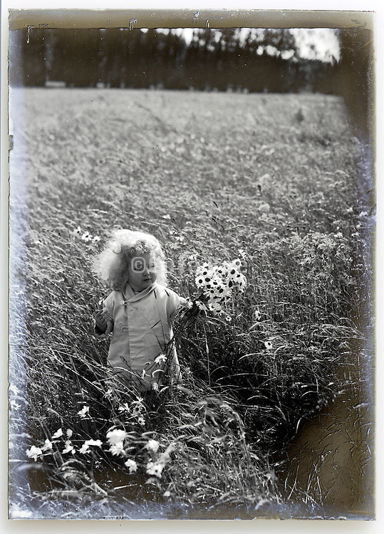 1900s glass plate with toddler in wheat field holding flowers