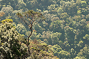 Horton Plains National Park.  It lies at a height of more than 2,000 m in the central highlands This is a key wildlife area. Species found here include Leopard, Sambar and the endemic Purple-faced Langur. All highland endemic birds are found here, including Dull-blue Flycatcher, Sri Lanka White-eye, Sri Lanka Wood Pigeon, and Sri Lanka Bush Warbler. Yellow-eared Bulbul and Black-throated Munia are widespread throughout the highlands.The park also has a well-visited tourist attraction at World's End, a sheer precipice with a 1,050 m drop. The return walk passes the scenic Baker Falls.