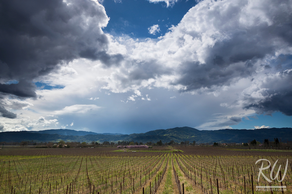 Storm Over Vineyards, Napa Valley, California