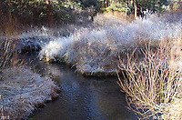 Frost Creek. Modoc National Forest, California - 1/7/2012.