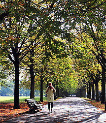 &copy; Licensed to London News Pictures. 13/10/2016<br /> Autumn weather in Greenwich Park,Greenwich,London<br /> <br /> <br /> Photo credit :Grant Falvey/LNP