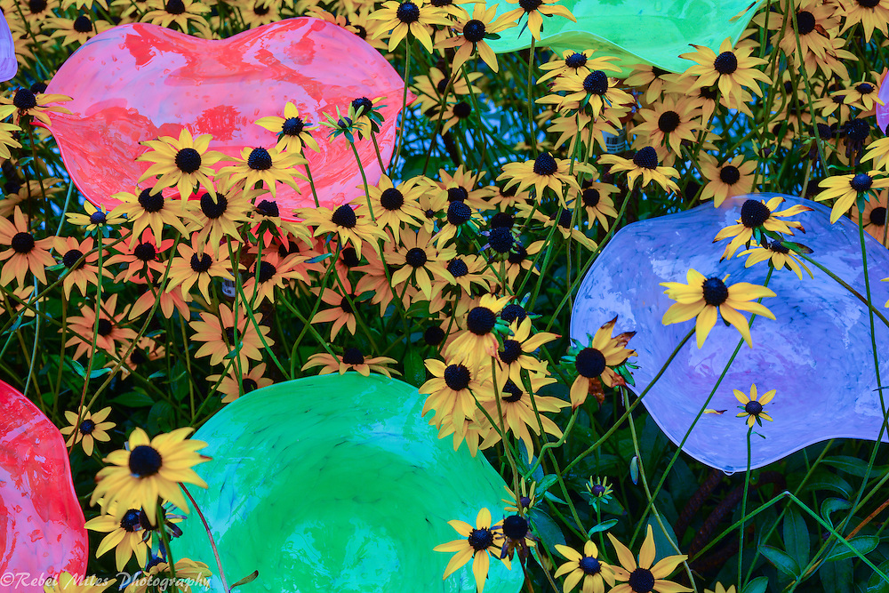 Black Eyed Susans And Glass Lawn Ornaments