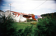 The Newport prefabs estate, 2003. Thousands of post-war prefabs are still being lived in and cherished by their tenants or owners all over the UK.