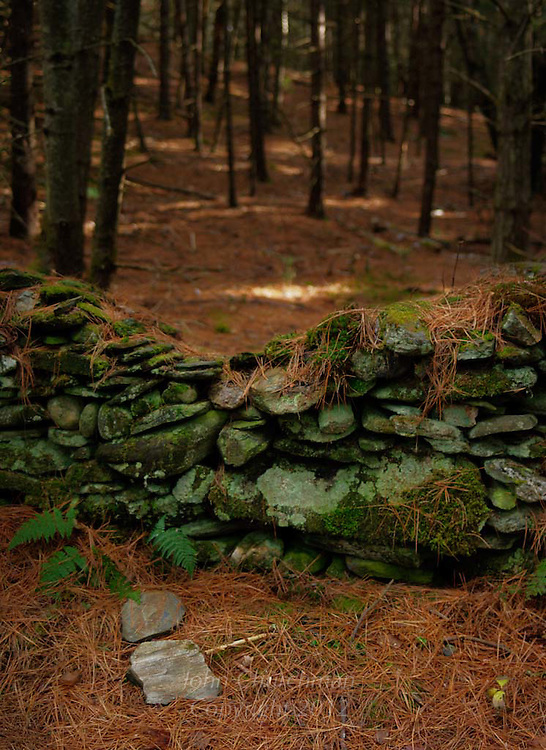 Old stonewall in the woods