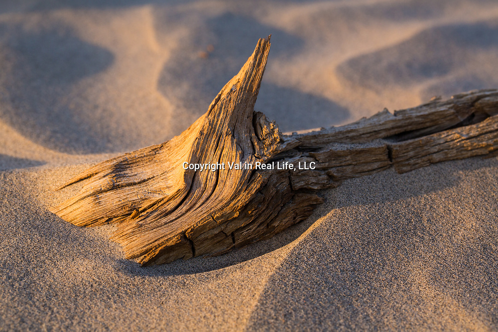 Death Valley National park, Mesquite Sand Dunes, Death Valley, wood, texture
