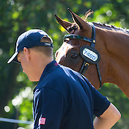 Misdee Wrigley Miller, (USA), Agusstos Armoei, Beau, Carlos, Clemens, Saco - Horse Inspection Driving - Alltech FEI World Equestrian Games&trade; 2014 - Normandy, France.<br /> &copy; Hippo Foto Team - Leanjo de Koster<br /> 25/06/14